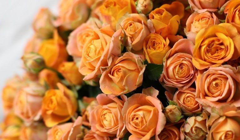 Желтые и оранжевые пионовидные розы