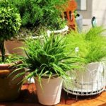 Как удобрять золой комнатные растения