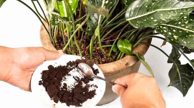 Зола с органикой для комнатных растений