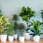 Какие бывают комнатные растения