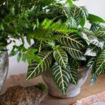 Комнатные декоративные растения