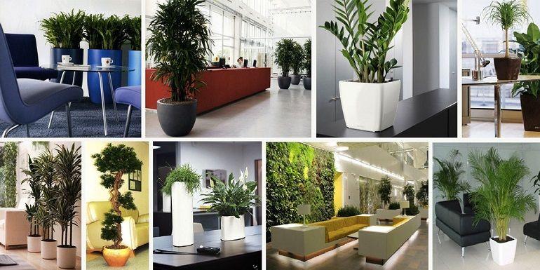 Декоративно-лиственные комнатные цветы