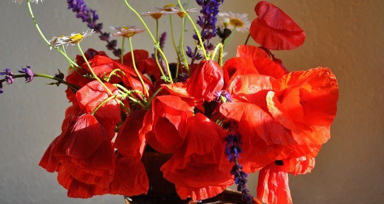 Красные полевые цветы