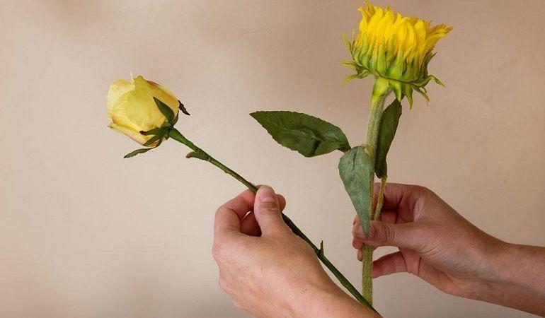 Подсолнух роза