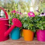 Как правильно поливать комнатные цветы