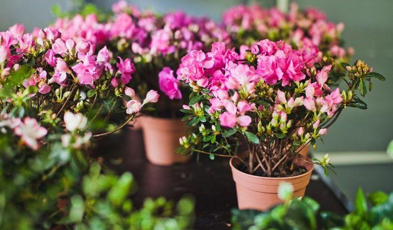 Почва для комнатных цветов