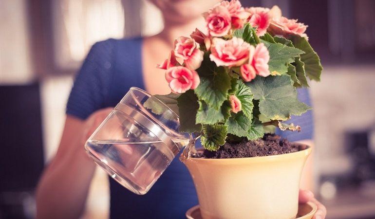 Полив комнатных цветов снизу