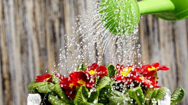 Как поливать комнатные цветы сверху