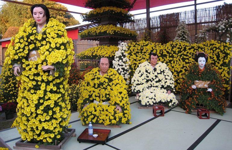 Хризантемы в Японии