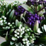 Декоративная зелень для букетов
