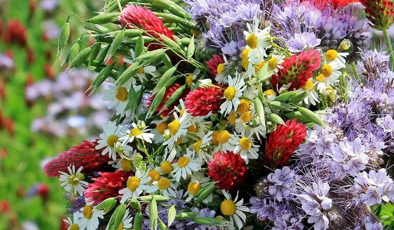 Какие полевые цветы взять для букета