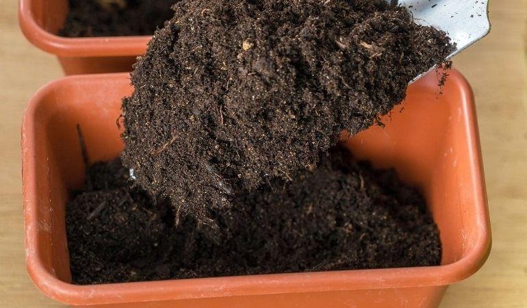 Почва для бегонии