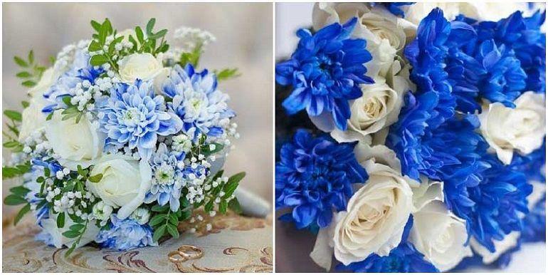 Синие и голубые хризантемы