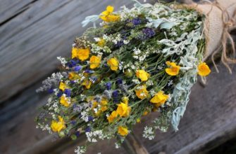 Шикарные полевые цветы