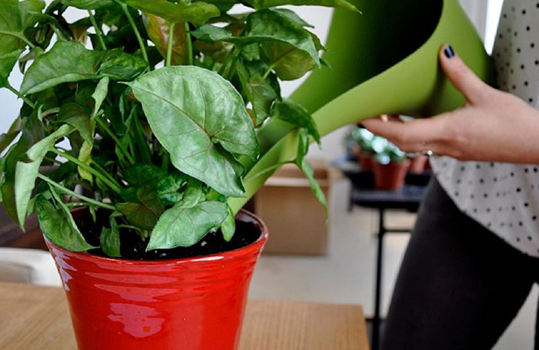 Подкормка для комнатных растений из домашних средств