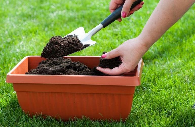 Использование органических удобрений для подкормки домашних цветов