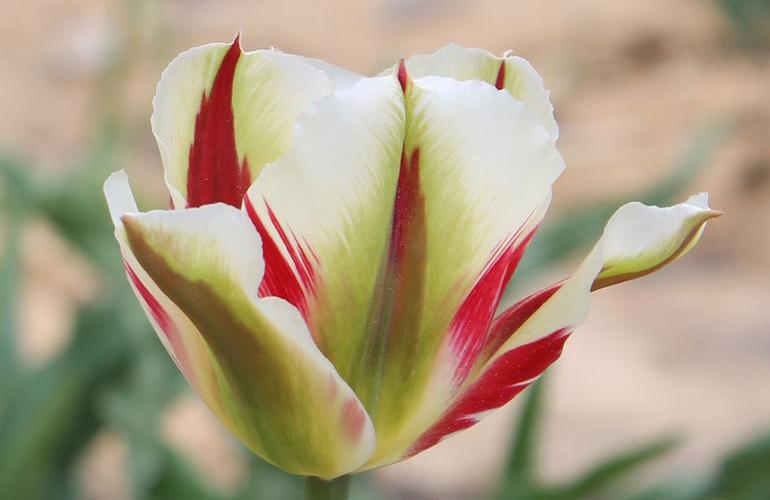 Flaming Springgreen